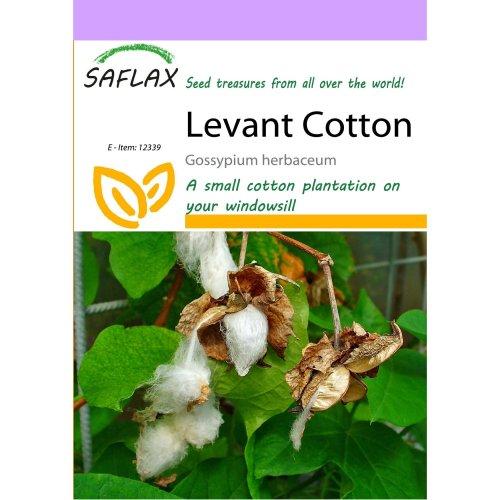 Saflax  - Levant Cotton - Gossypium Herbaceum - 12 Seeds