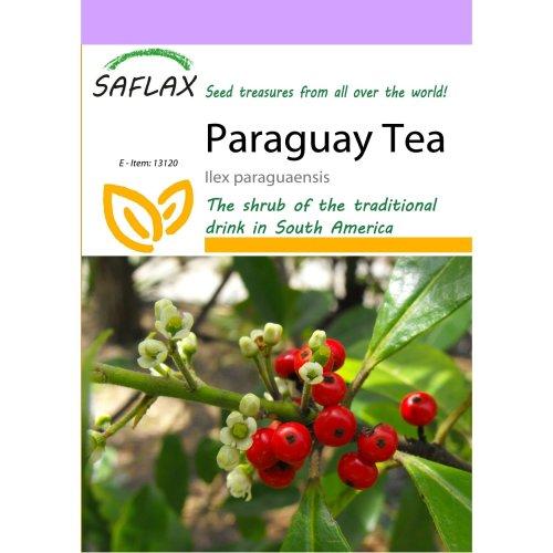 Saflax  - Paraguay Tea - Ilex Paraguaensis - 10 Seeds