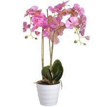 Pink Potted Orchid -  pink potted orchid
