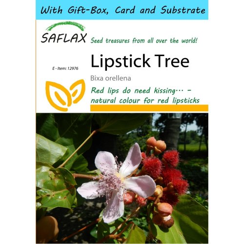 Saflax Gift Set - Lipstick Tree - Bixa Orellena - 20 Seeds - with Gift Box, Card, Label and Potting Substrate