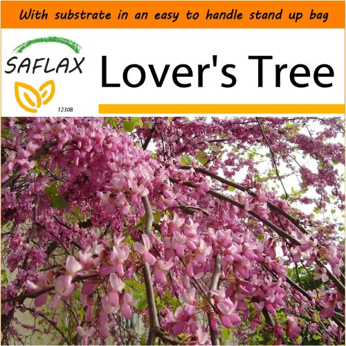 SAFLAX Garden in the Bag - Lover's Tree - Cercis - 60 seeds
