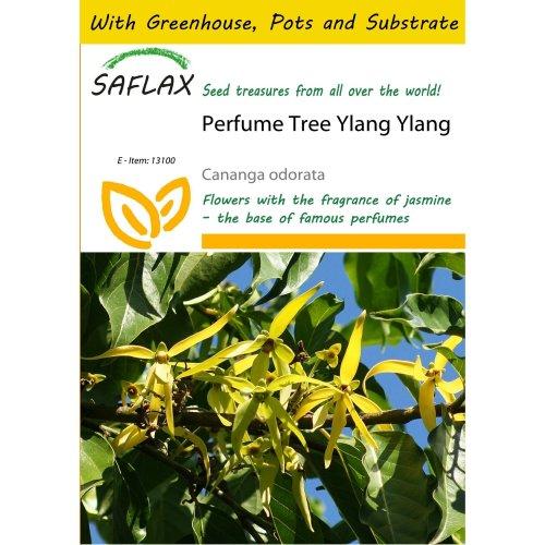 Saflax Potting Set - Perfume Tree Ylang Ylang - Cananga Odorata - 10 Seeds - with Mini Greenhouse, Potting Substrate and 2 Pots