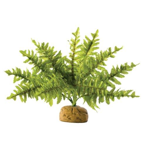 Exo Terra Rainforest Plant Boston Fern Small