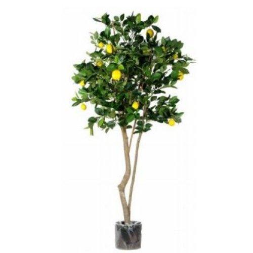 Artificial Silk Lemon Fruit Tree - 150cm, Green