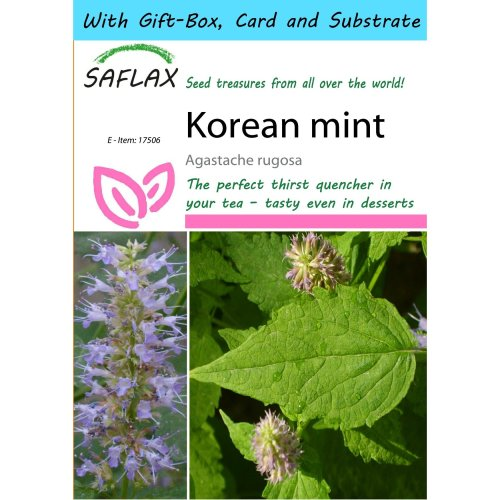 Saflax Gift Set - Korean Mint - Agastache Rugosa - 1200 Seeds - with Gift Box, Card, Label and Potting Substrate