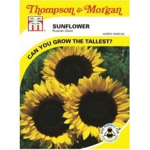 Thompson & Morgan - Flowers - Sunflower Russian Giant - 60 Seed