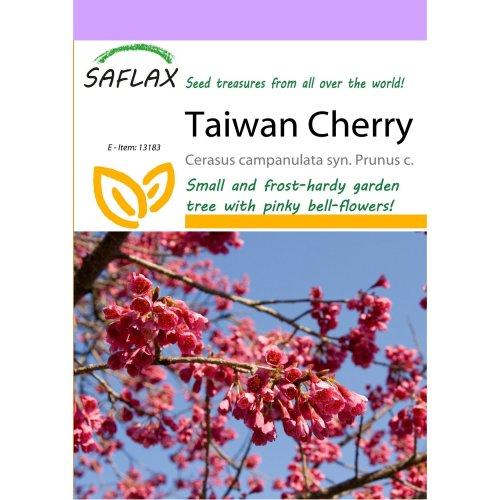 Saflax  - Taiwan Cherry - Cerasus Campanulata Syn. Prunus C. - 10 Seeds