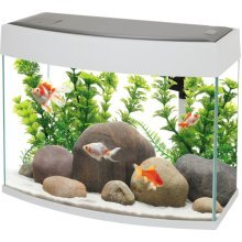 Fish R Fun, Panoramic Fish Tank 20L White, LED Lighting